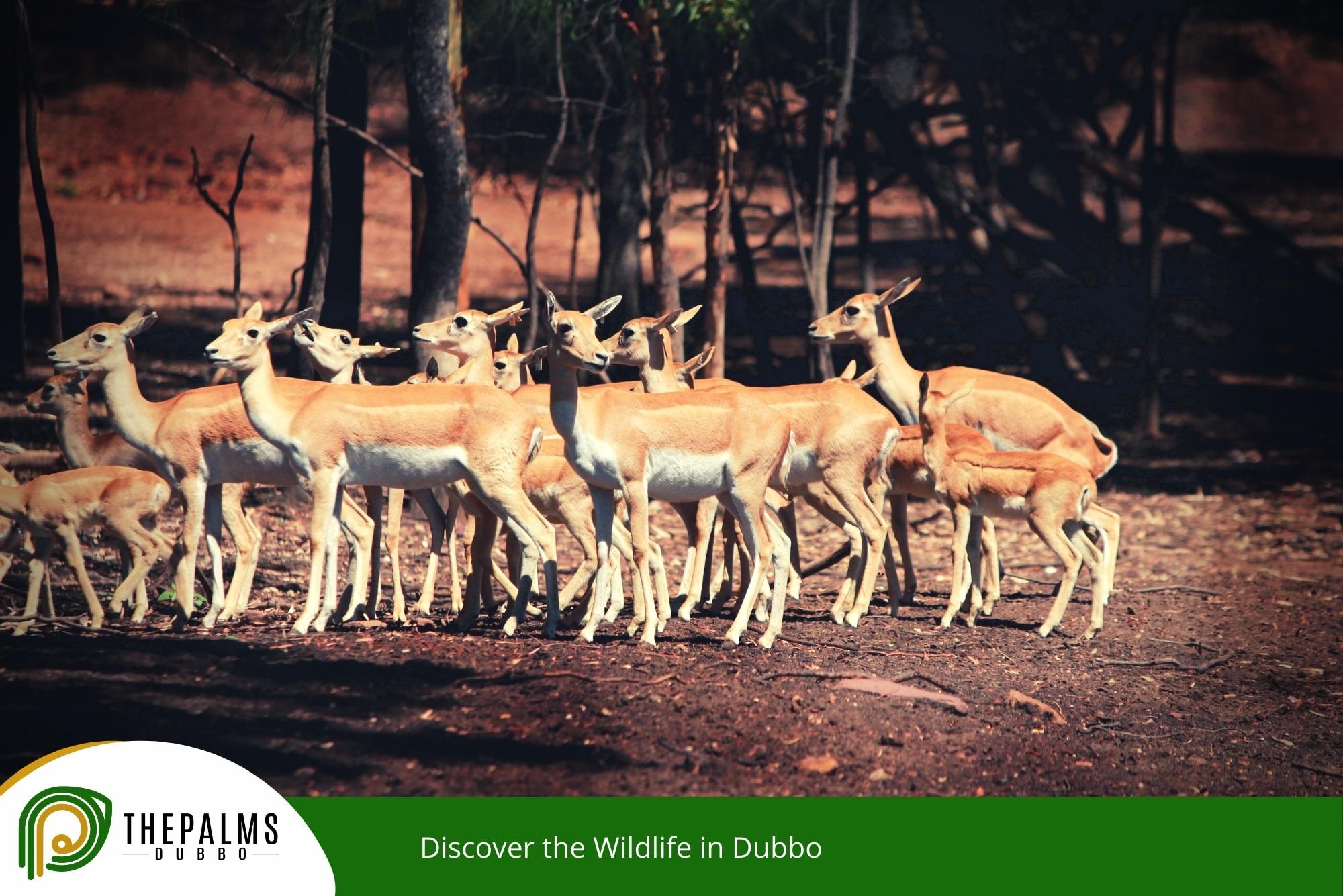 Discover the Wildlife in Dubbo