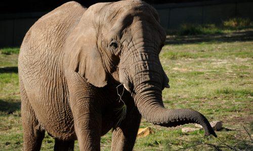 Taronga Western Plains Zoo 2