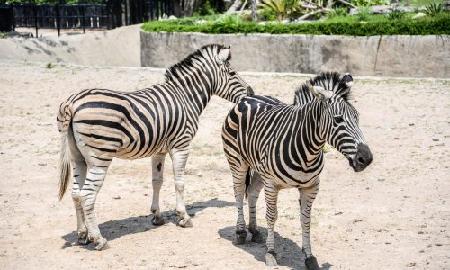 Taronga Western Plains Zoo 3