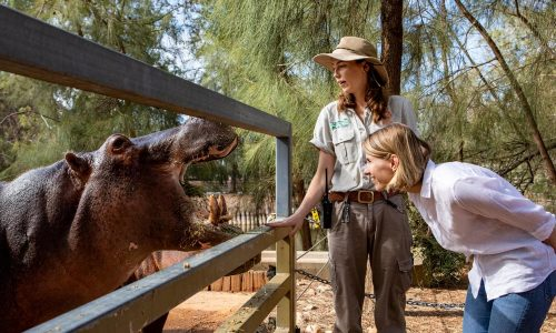 hippo taronga zoo dubbo